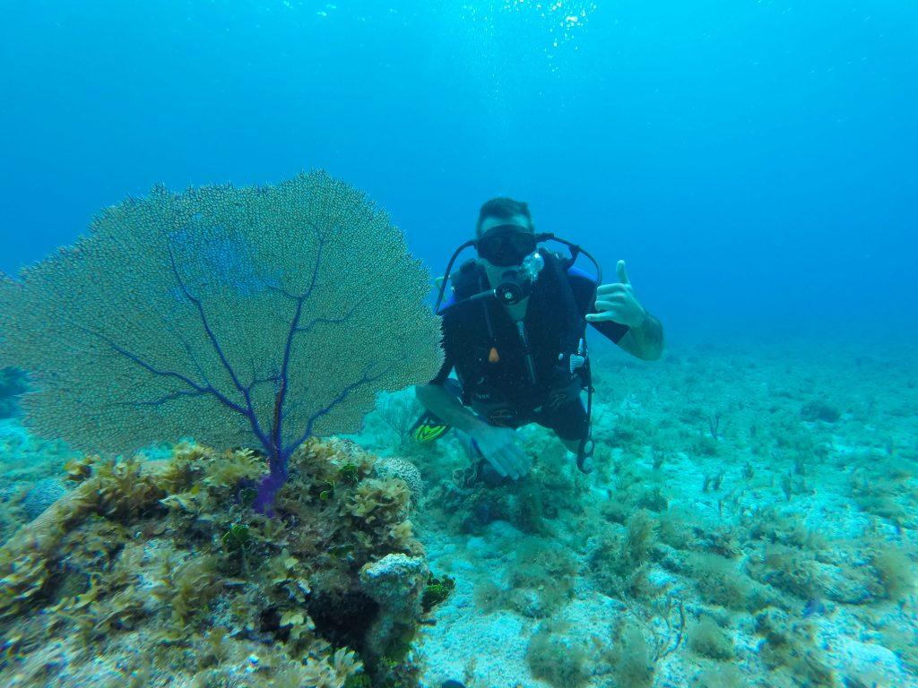 Cozumel two tank scuba diving cozumel cruise excursions - Cozumel dive sites ...
