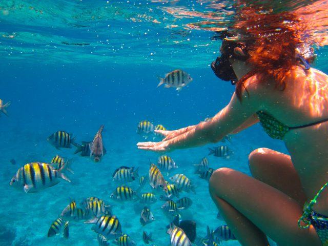 Cozumel Snorkeling palancar reef Fish