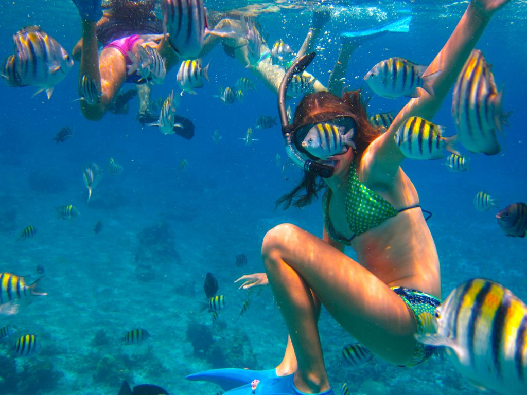 Cozumel Private Snorkeling Sealife