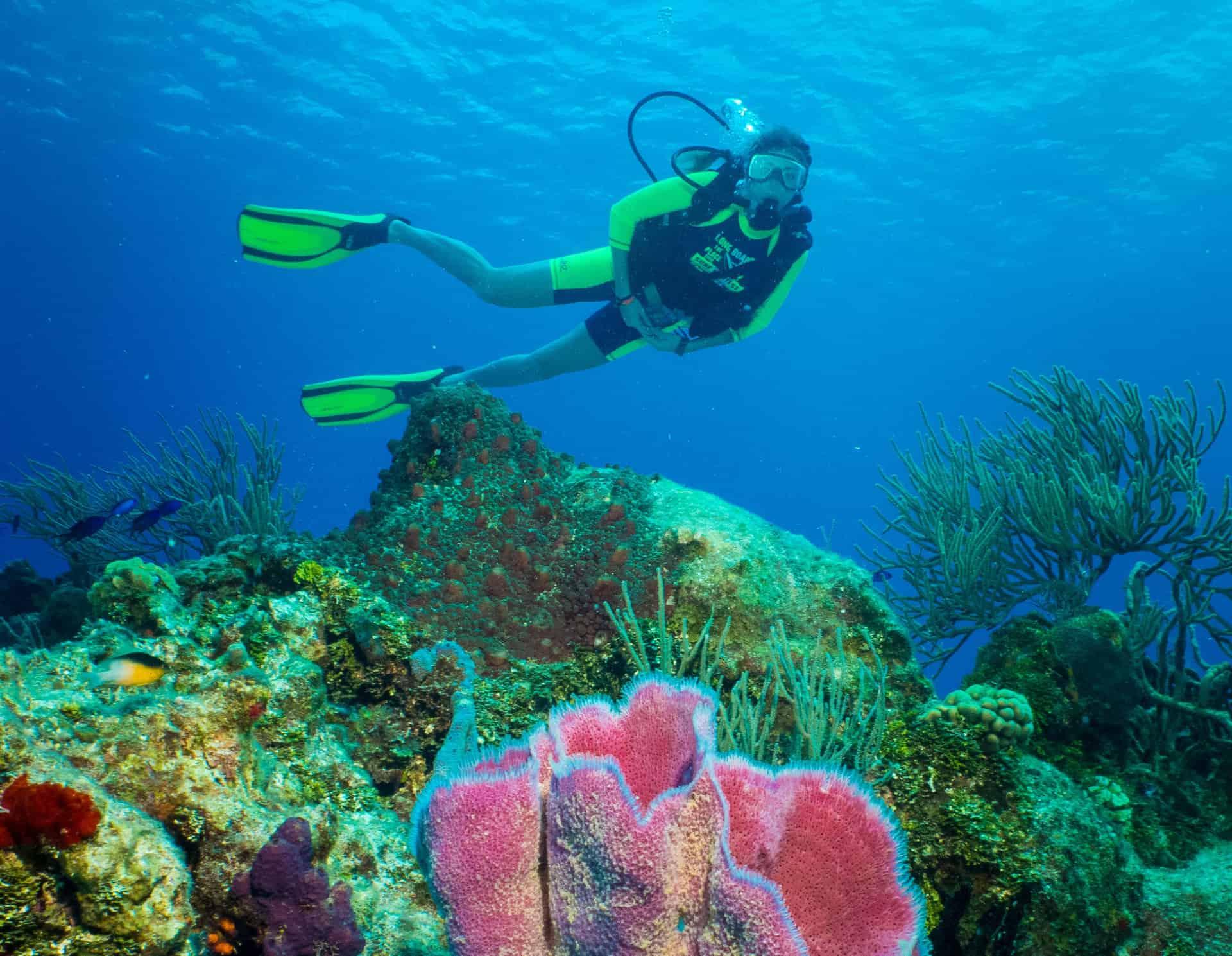 Cozumel Scuba Diving Cozumel Cruise Excursions