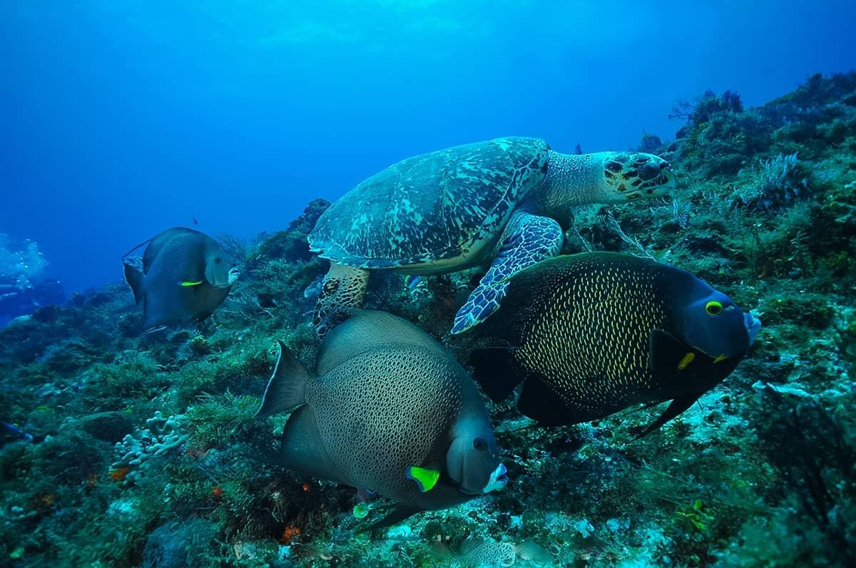 Island Marketing Ltd Cayman St Maarten Cruise Excursions