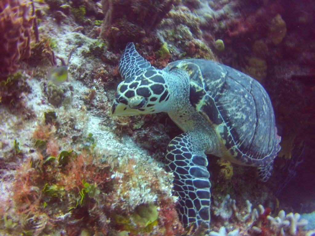 Cozumel Discover Dive Reef