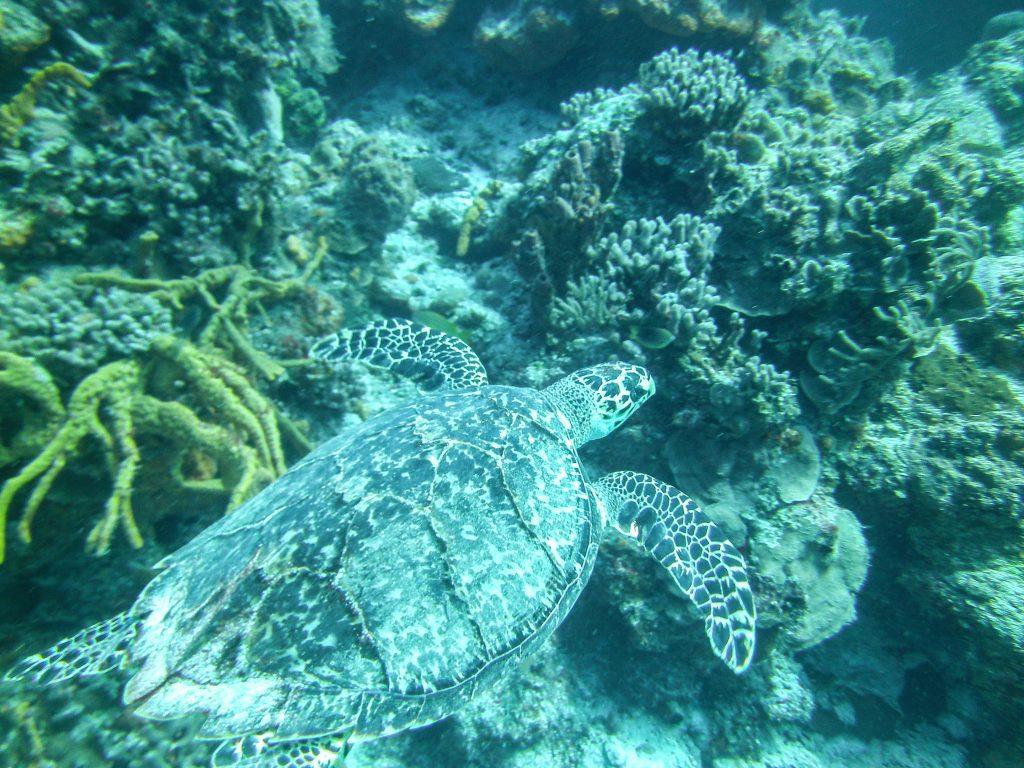 Cozumel Two Tank Scuba Diving - Cozumel Cruise Excursions