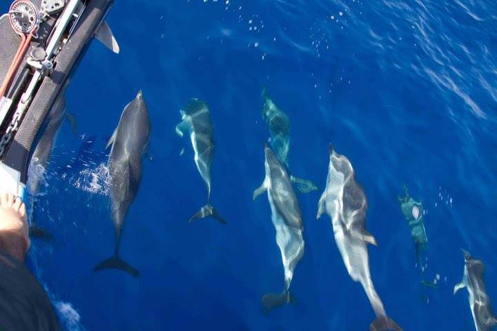 dolphins Cozumel private sailing